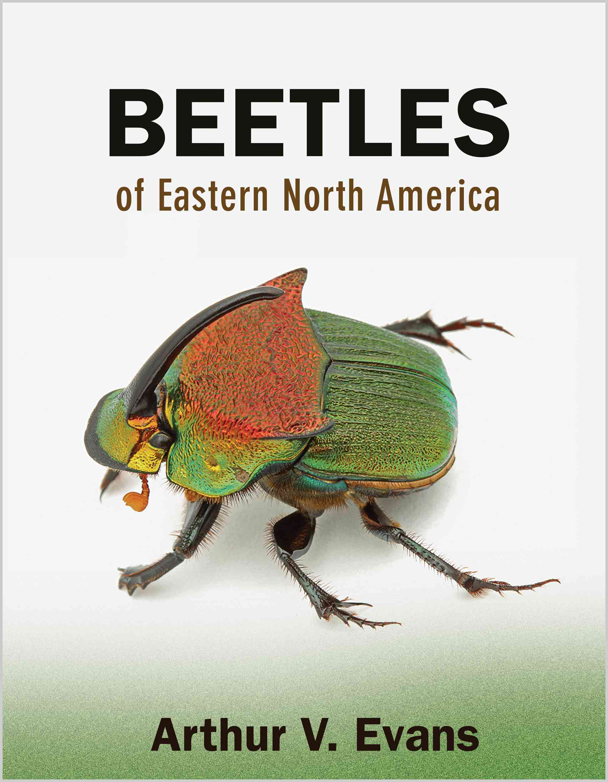 Beetles of Eastern North America By Evans, Arthur V.